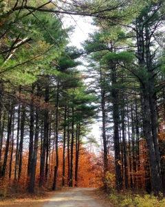 Vermont trees 2